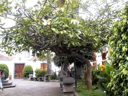 La Palma Aktuell - Flora
